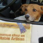 In Aix, Milo is a minor market celebrity
